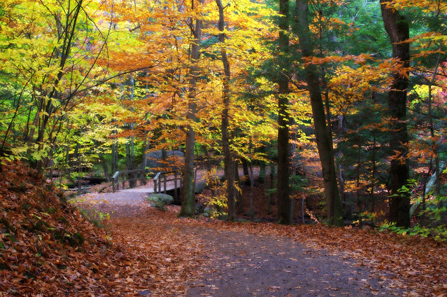 Captions by Nica... (Fieger... - Thoughts of Fall, keep lingering...