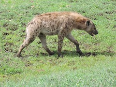 8721832460 072ccf2493 m The best vacation and best experience. Thomson Safaris Review: Ed & Karen B.