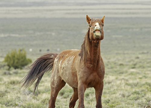 8727929634 14ba12caa5 Feral Horse Grin