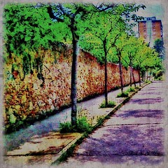 Trees between a wall and a road