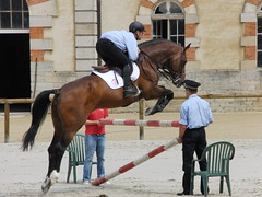 western riding(0.0), dressage(0.0), animal sports(1.0), equestrianism(1.0), english riding(1.0), eventing(1.0), mare(1.0), stallion(1.0), jumping(1.0), show jumping(1.0), hunt seat(1.0), equestrian sport(1.0), rein(1.0), sports(1.0), animal training(1.0), equitation(1.0), horse(1.0), horse harness(1.0), jockey(1.0),
