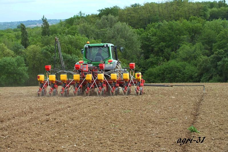 semis de sorgho 2013