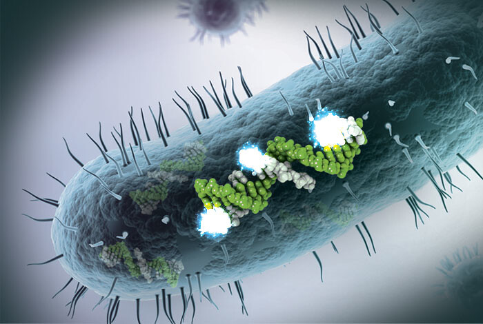 Artist's concept of the fluorescence labeling and detection of small RNA in pathogenic bacteria.