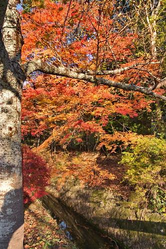 【写真】2012 紅葉 : 哲学の道/2020-10-03/IMGP7443