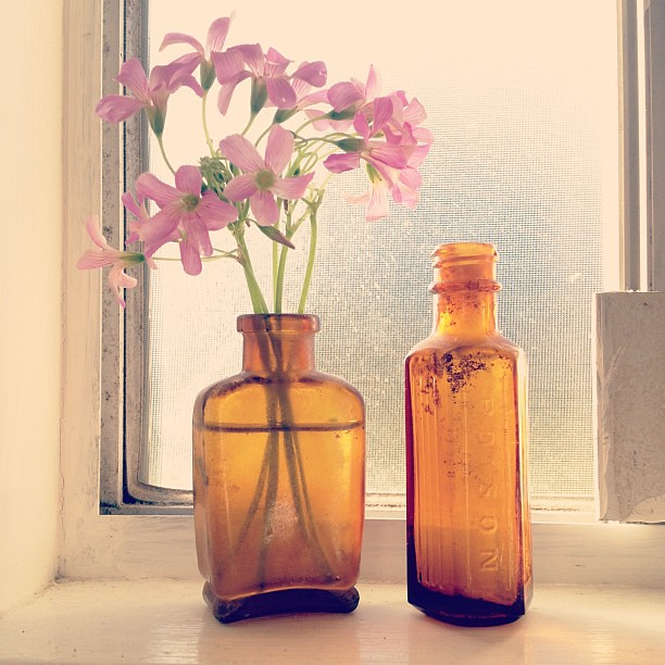 Pretty weeds and vintage medicine and poison bottles. #cornersofmyhome