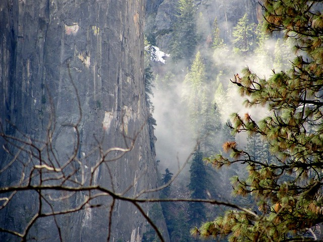 Misty Trees and Rock Face