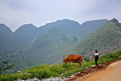 A kid and his cow look on towards Meo Vac