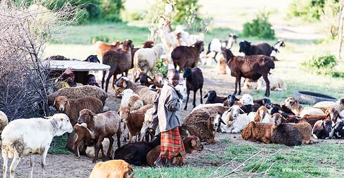 Kenia - Masai Mara 02