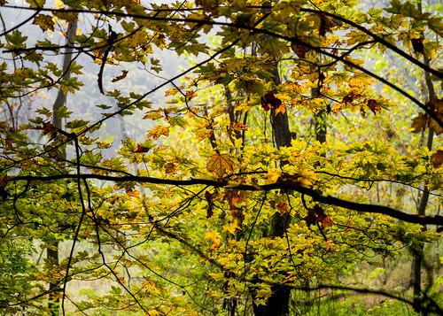 Fall Greens and Yellows
