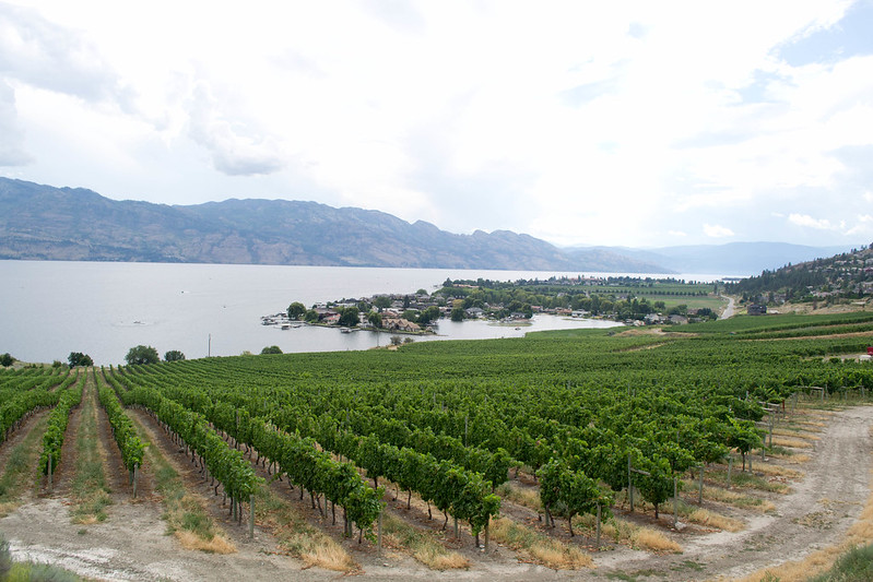 Quail's Gate Winery | 20 Reasons Why British Columbia is the Best Place on Earth | packmeto.com