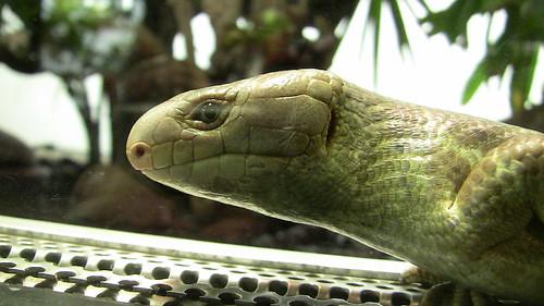 In the Reptile House, WIlhelma Zoo