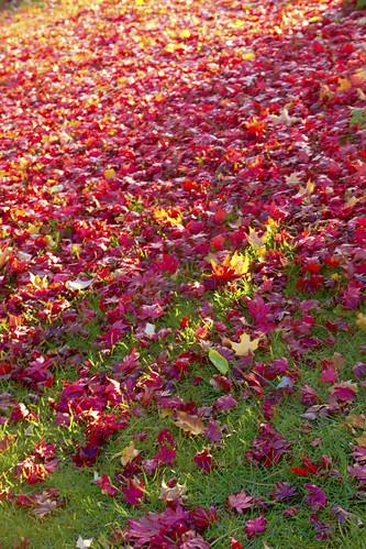 11-13 fall-9486-Edit-24