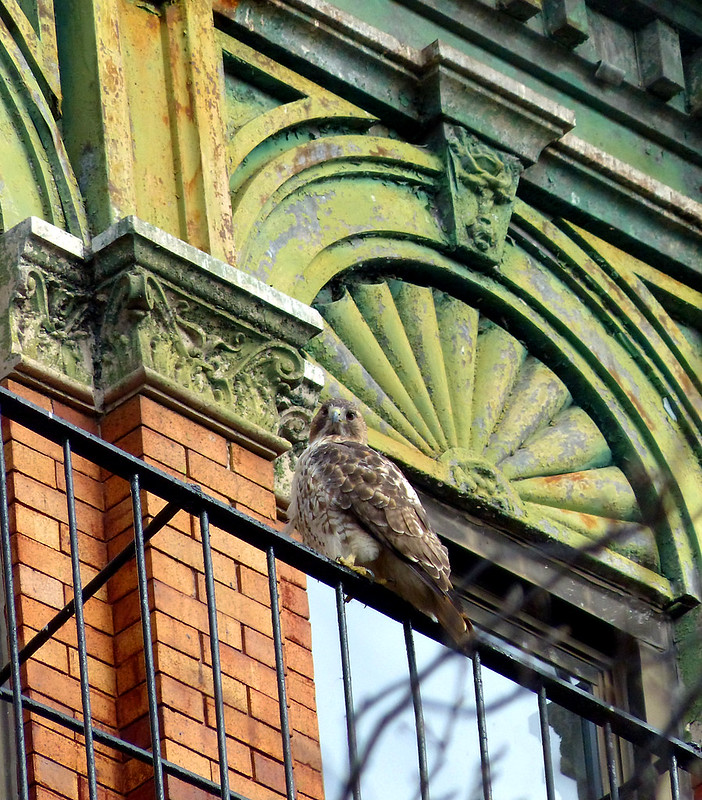 Red tail on fire escape