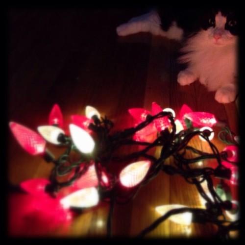 #fmsphotoaday December 15 - Lights