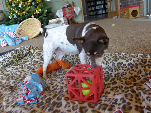 2013-12-25 - Opening Presents - 0060 [flickr]