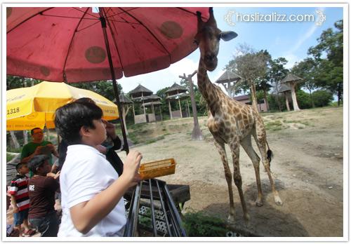 11713420263 4f593cef1b o BERCUTI DI HATYAI THAILAND PART 6   songkhla Zoo