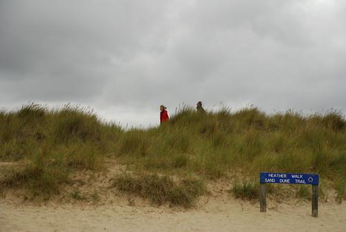 NT認為天然沙丘具有消波的能力。