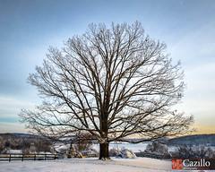 Scenic Tree Over Marsh Creek Lake