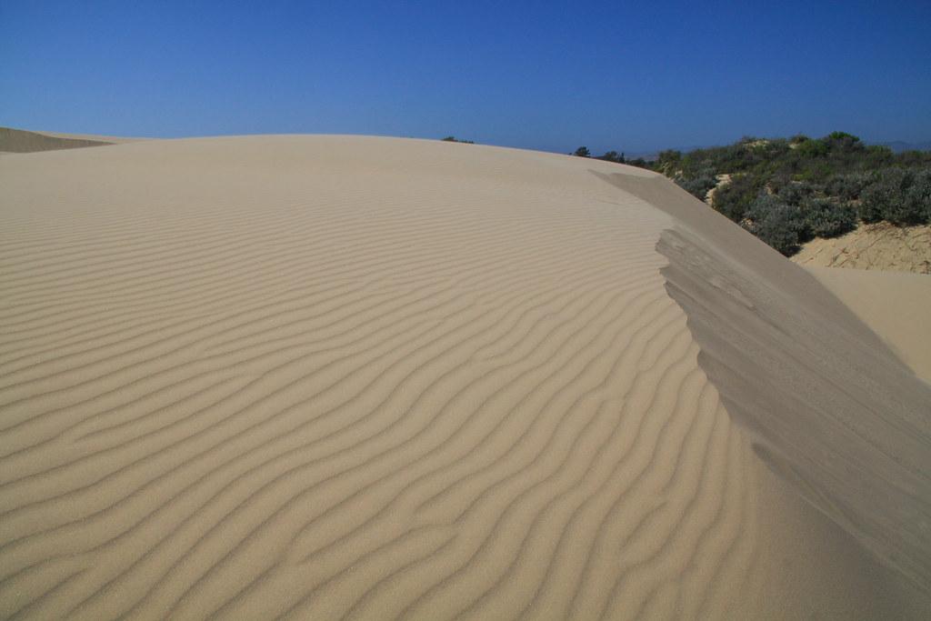Pismo Dunes Natural Preserve San Luis Obispo County