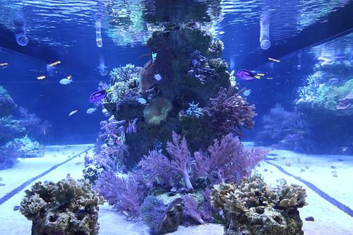 sumida_aquarium5