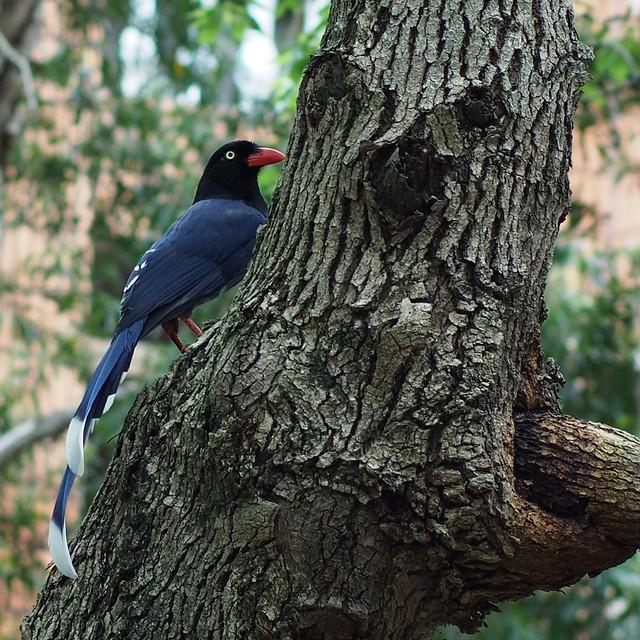 天母公園 - 飛羽