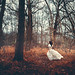 Into the Woods by Sarah Ann Wright