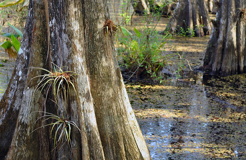 nature outdoors flora florida parks swamp preserves