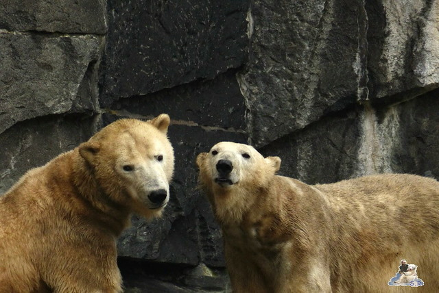 Tierpark Berlin 07.02.2015   215