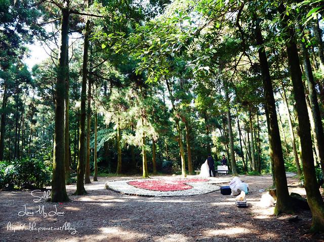 陽明山免費婚紗景點黑森林 (1)