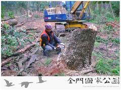 中山林染病(松材線蟲)伐除