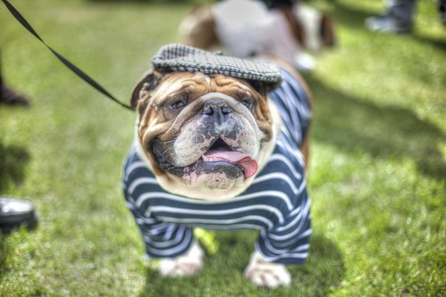 Bulldog by Photos by Ricardo