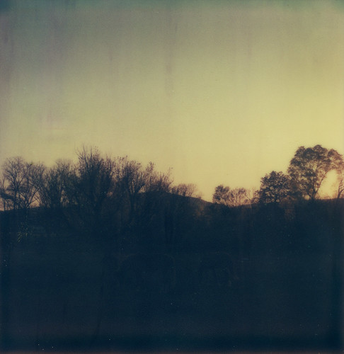 trees sunset horses film field polaroid sx70 dusk tennessee hills instant magichour dayton tzartistic
