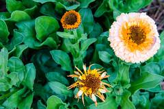 Flowers - Norfolk Botanical Garden