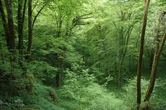 Forêt verte enchantée (Bucey-les-Gy)