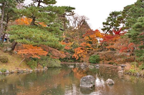 【写真】紅葉 : 円山公園
