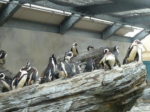 ペンギン@サンシャイン水族館