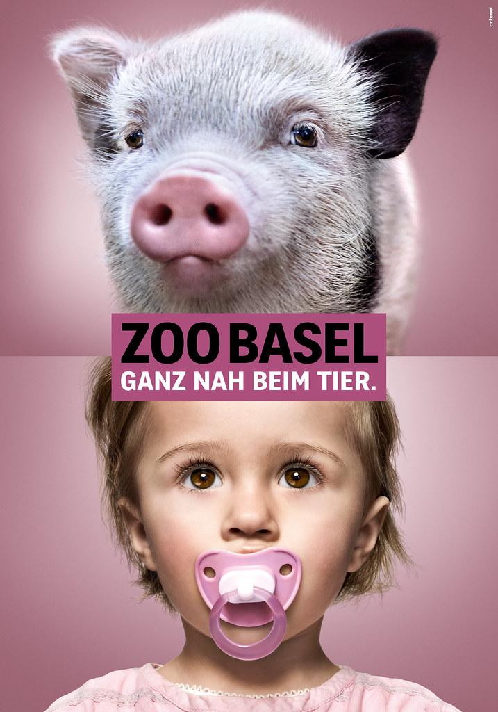 zoo teaser