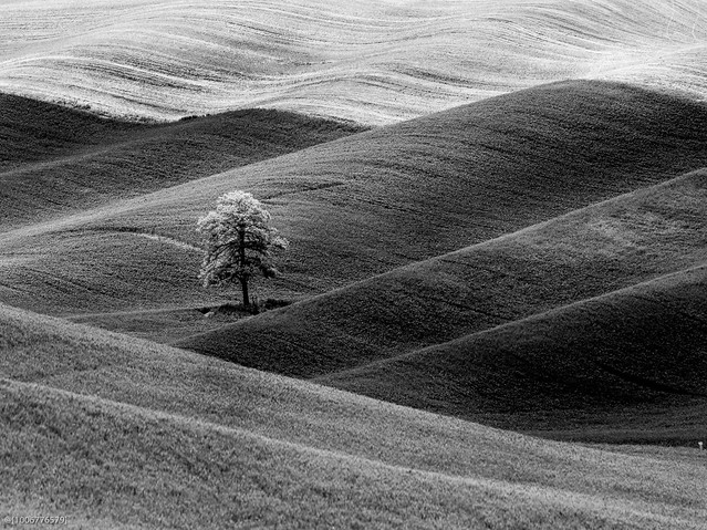 The Lonely Tree..., Pentax 645D, smc PENTAX-FA 645 400mm F5.6 ED [IF]