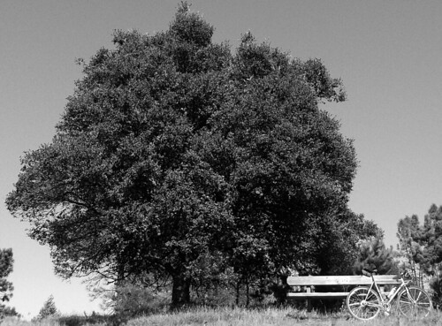 Tilden Tree, Bench, Bike