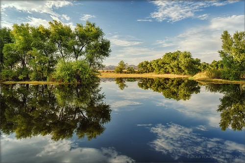 california trees summer lake reflection clouds landscape pond