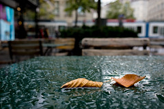 E' già cominciato l'autunno, a Zurigo...