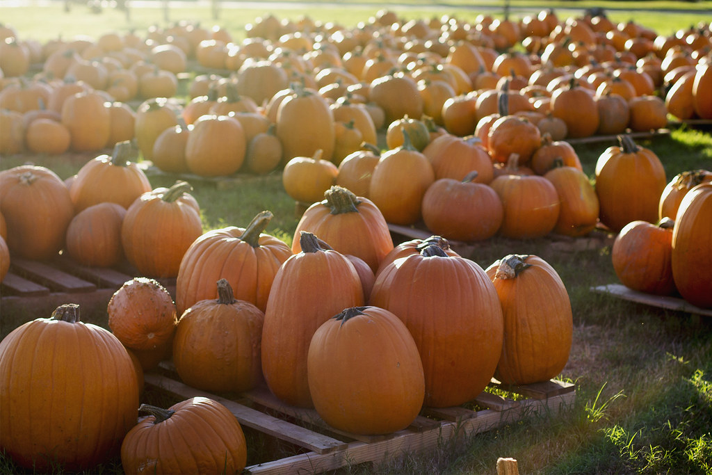 Pumpkin Patch, 1