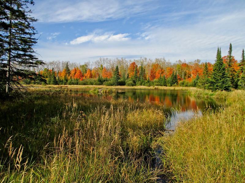 Beaver Pond Fall Colors on SHT
