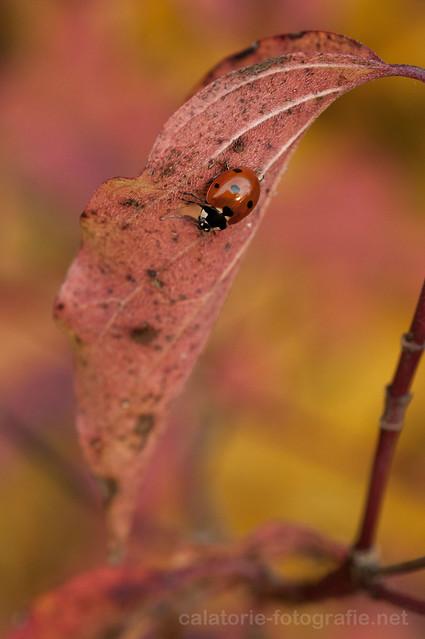 Frumusețea de la un pas de noi - în natură cu Nikon 60 mm Micro f/2,8 AF-D 10501520184_9864c889e9_z