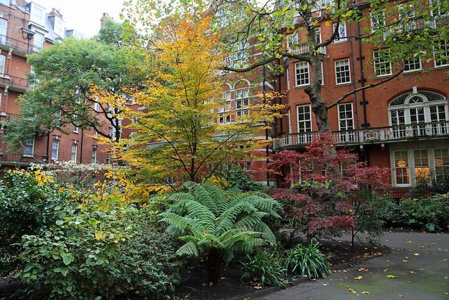 Autumnal Mount Street Gardens