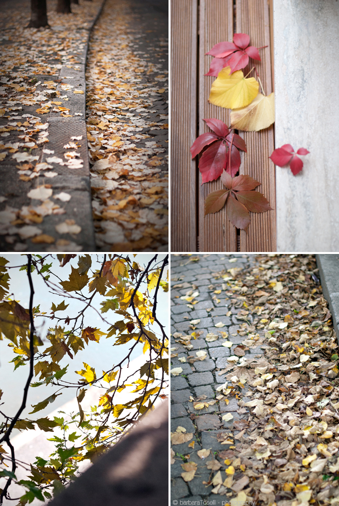 quattro foglie autunno 690
