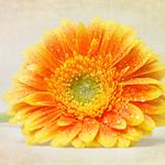 20140119-057_960-72_btd-Textured