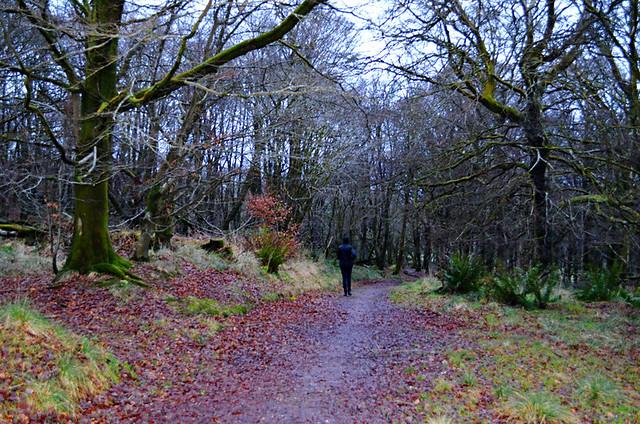 Skeoch Woods, Rothesay, Isle of Bute, Scotland