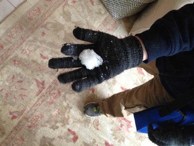 florida snowball