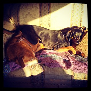 Good Morning from my hooey hounds! #dogstagram #houndmix #coonhoundmix #adoptdontshop #rescue #ilovemydogs #sunspot #sleepy #love #snuggles